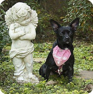 Chihuahua Dog for adoption in Durham, North Carolina - Baby Girl