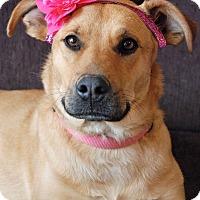 Adopt A Pet :: Chloe - Homewood, AL