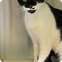 Adopt A Pet :: 10310861 MAMA - Brooksville, FL