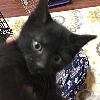 Adopt A Pet :: Darrell - Herndon, VA