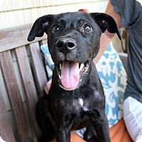 Adopt A Pet :: Margo - Groton, MA