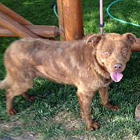 Adopt A Pet :: chester - Midvale, UT