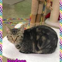 Adopt A Pet :: Isadora - Jasper, IN