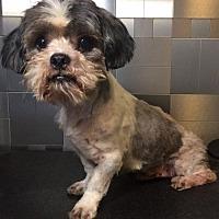 Adopt A Pet :: Chris Pratt - McKinney, TX