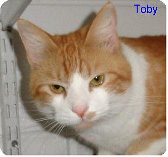 Domestic Shorthair Cat for adoption in Ozark, Alabama - Toby