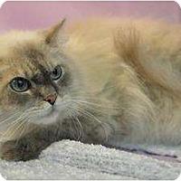 Adopt A Pet :: Kit Kat - Easley, SC