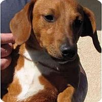 Adopt A Pet :: Pugsley - Garden Grove, CA