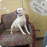Adopt A Pet :: Bandit - Crawfordville, FL