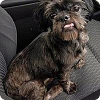 Adopt A Pet :: Alf - Toronto, ON