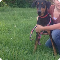 Adopt A Pet :: Chase - selden, NY