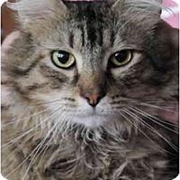 Adopt A Pet :: Clancy - Columbus, OH