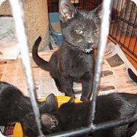 Adopt A Pet :: Nascar - Delmont, PA