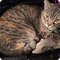 Adopt A Pet :: Darma Tabico - McDonough, GA