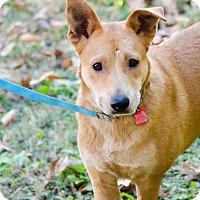 Adopt A Pet :: Stephanie - Arlington, TN