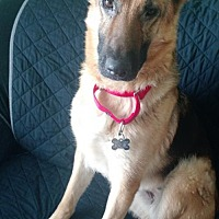 Adopt A Pet :: Ruby Roo (Adoption Pending) - Morrisville, NC