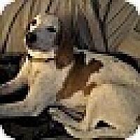 Adopt A Pet :: Gabby - Glen St Mary, FL