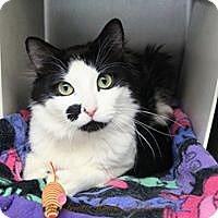 Adopt A Pet :: Molson - Anchorage, AK