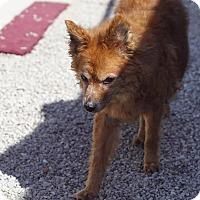 Adopt A Pet :: PRINCESS - Port Clinton, OH