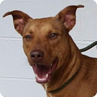 Adopt A Pet :: Lucy - Harrisonburg, VA