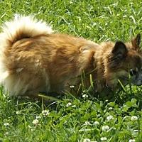 Adopt A Pet :: Lizzy - Zaleski, OH