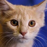 Adopt A Pet :: Pinky - Winston-Salem, NC