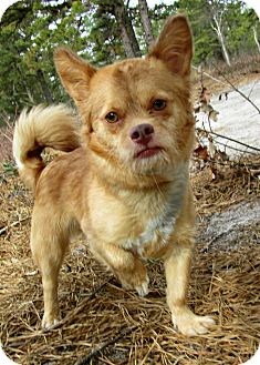 Terrier (Unknown Type, Small) Mix Dog for adoption in Forked River, New Jersey - Yoda