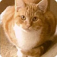 Adopt A Pet :: Zeus - Medway, MA