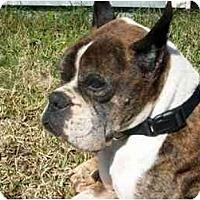 Adopt A Pet :: Waler - Brunswick, GA