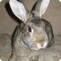 Adopt A Pet :: Elizabeth - Maple Shade, NJ