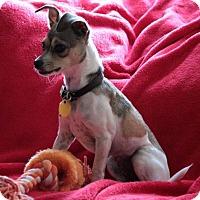 Adopt A Pet :: Lil Sissy - Lynnwood, WA