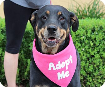 Rottweiler Mix Dog for adoption in Las Vegas, Nevada - DEUCY