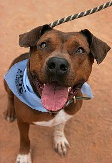 Plott Hound Mix Dog for adoption in Asheboro, North Carolina - Jameson