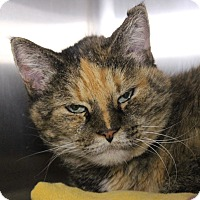 Adopt A Pet :: Mizzy - Middletown, CT
