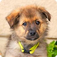 Adopt A Pet :: Rudy von Wuste - Thousand Oaks, CA