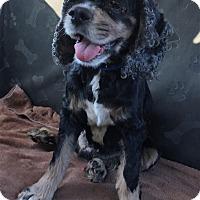 Adopt A Pet :: Leo-ADOPTED! - Sacramento, CA