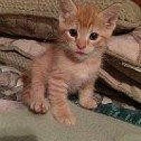 Adopt A Pet :: DUKE - Hampton, VA