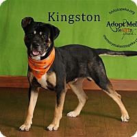 Adopt A Pet :: Kingston - Topeka, KS