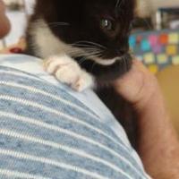 Adopt A Pet :: FERDINAND - Graham, TX