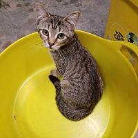 Adopt A Pet :: Feta - Fairbury, NE