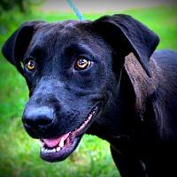 Adopt A Pet :: Mindy - Southbury, CT