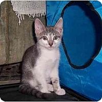 Adopt A Pet :: Bullet Tile - Alexandria, VA