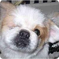Adopt A Pet :: Millard-NJ - Mays Landing, NJ