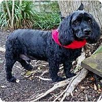 Adopt A Pet :: Rocky - Sugarland, TX