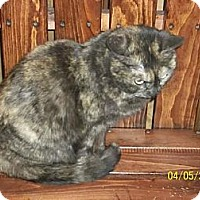 Adopt A Pet :: torties - Norwich, NY