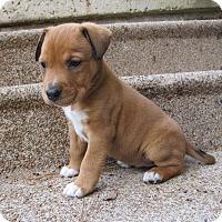 Adopt A Pet :: Pumpkin - Kingwood, TX