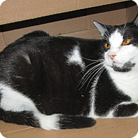 Adopt A Pet :: Chrissie - Norwich, NY