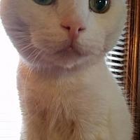 Adopt A Pet :: Louie - Grand Blanc, MI