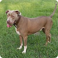 Adopt A Pet :: Obi - Houston, TX