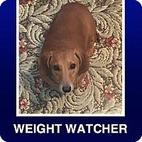 Adopt A Pet :: Cyrus - Morrisville, PA