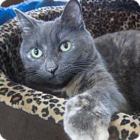 Adopt A Pet :: Crystal - Roseville, MN
